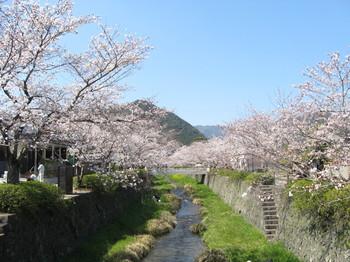 一の坂川の桜.JPG