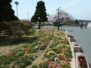 常盤公園花壇.JPG