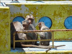 猿(2).JPG