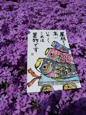 こいのぼりと芝桜.JPG