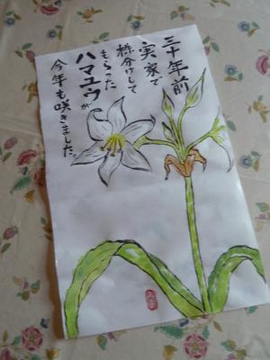 ハマユウ.JPG