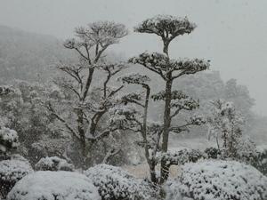 H24、1、26雪景色.JPG